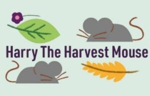Harry The Harvest Mouse